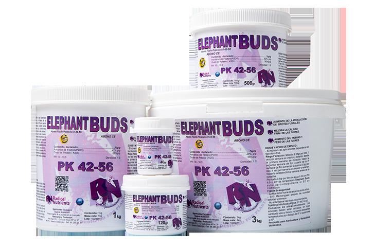 Elephant buds