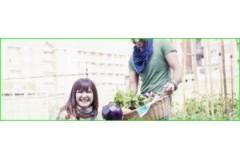 Azoteas verdes