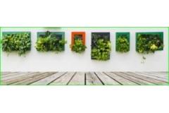 ¿Qué plantas hay que poner en el huerto vertical?