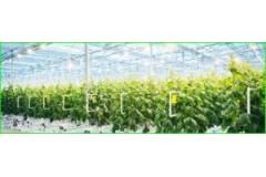 Luz artificial para las plantas.
