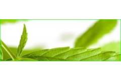 La respiración y la fotosíntesis.